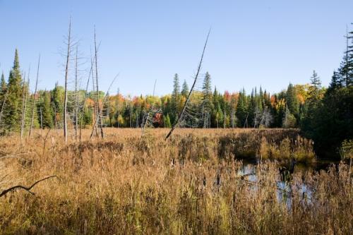 Wetland Fall
