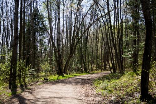 Spring Walk on Cranberry Trail