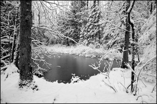 Moffat's Pond BW