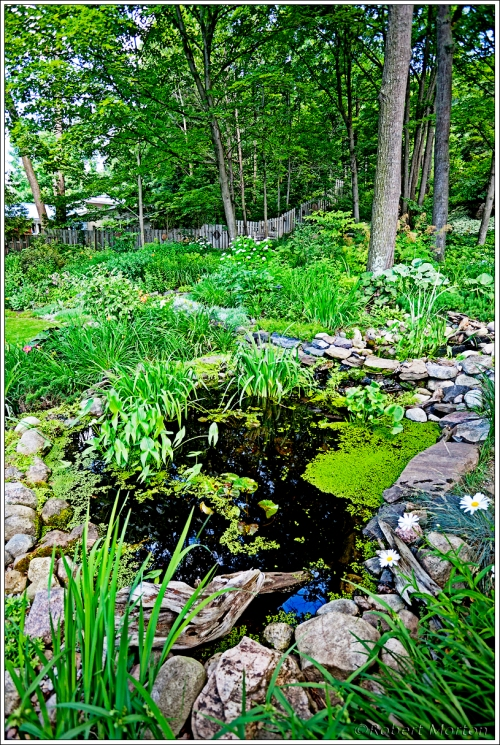 Summer Garden Pond