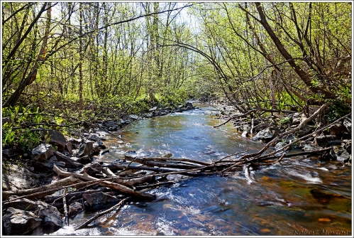 Chippewa Creek Spring