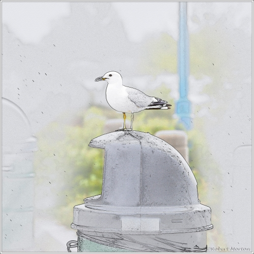 Gull Line Drawing