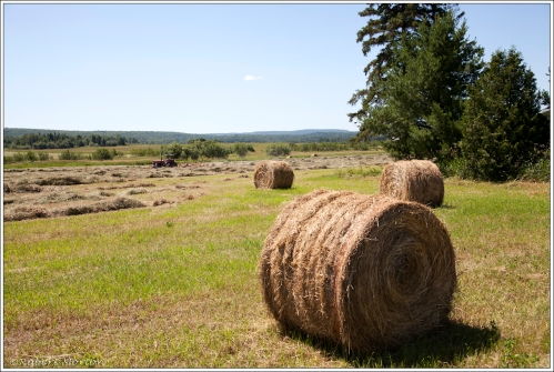 Hay Bales in Chisolm Township