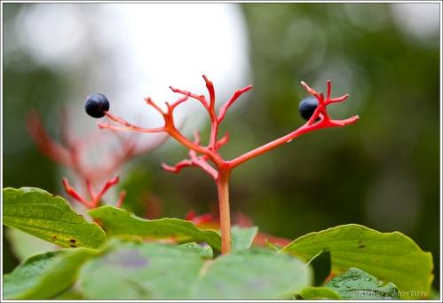 Berrys & Stem