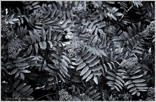 Leaves & Berries Monochrome