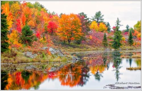 Colour Pond