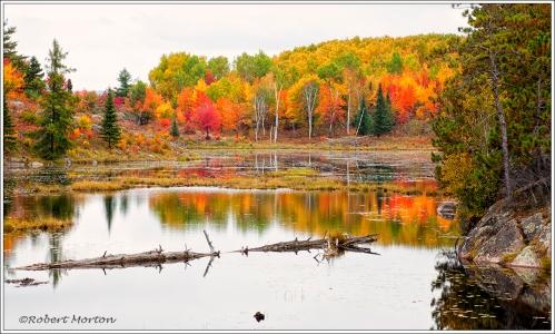 Pond Autumn Colours
