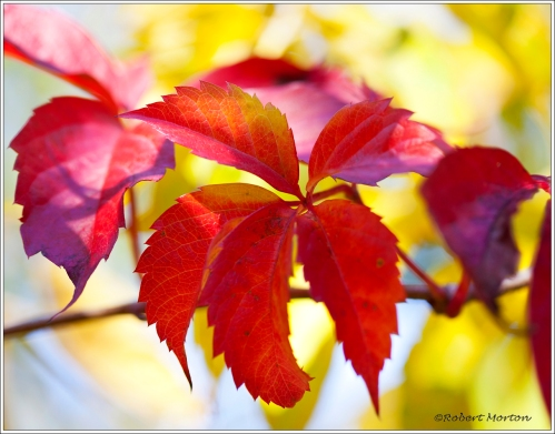 Red of Autumn