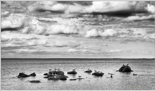 Nipissing Rocks Gulls Clouds