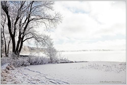 Portage Park Frost