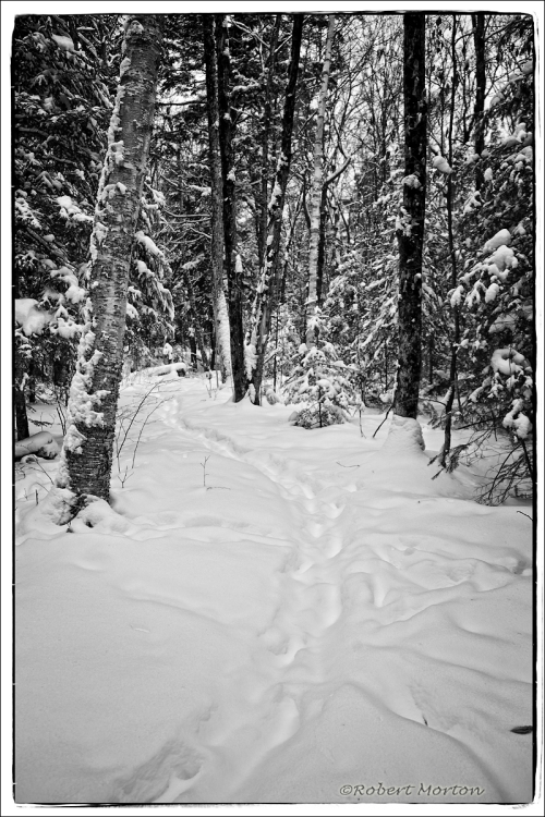 Winter Trail II