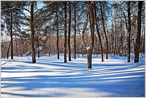 Shadows Trees II