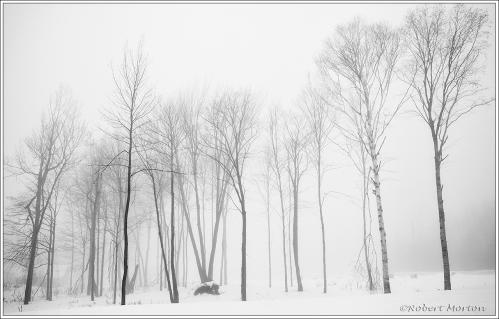 Trees Fog I
