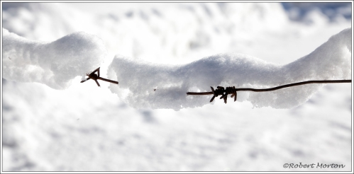 Barbed Snow