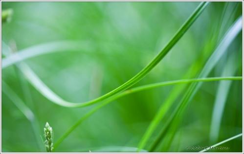 Green Rhythm