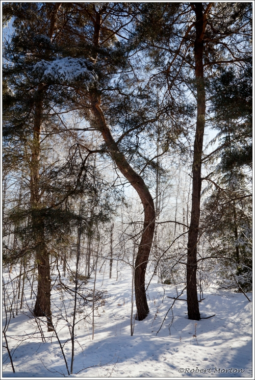 UpSun Pines