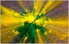 Daffodil Zoom III