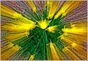 Daffodil Zoom