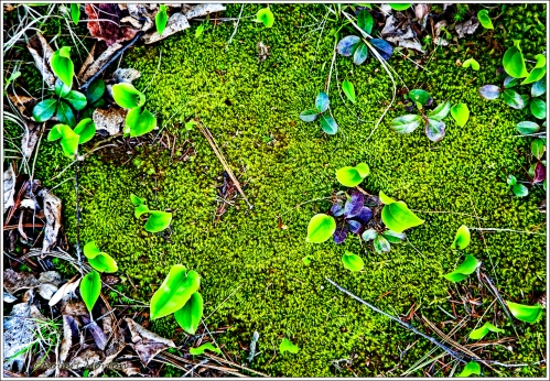 Forest Floor Moss Spring