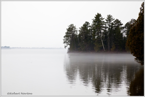 Loon in Fog