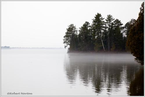 Loon in Fog