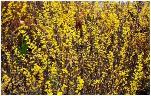 Spring Leaves 2