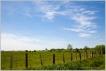 Sky and Fencerow