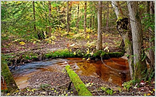 Green Log II