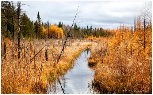 Tamarack Wetland