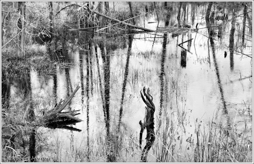 Widdifield Station Swamp