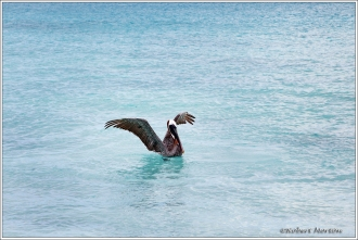 Gardner Bay Wildlife