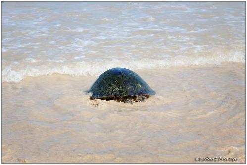 Turtle Take Off