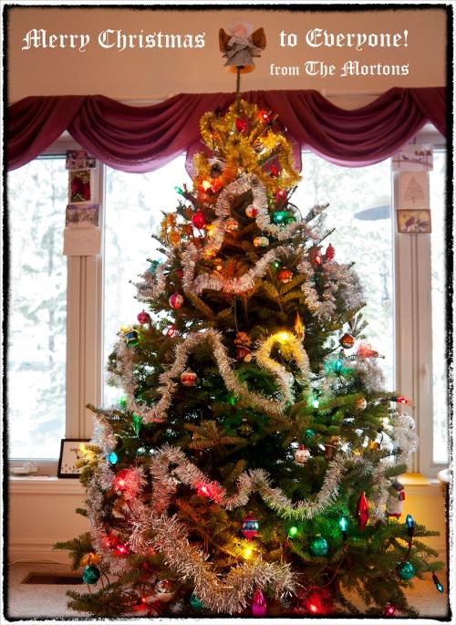 _MG_8980 Merry Christmas