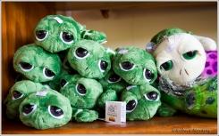 Plush Tortoises