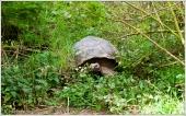Tortoise Hiding