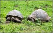 Tortoise Pair