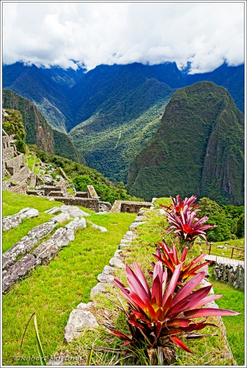 Machu Picchu Plants