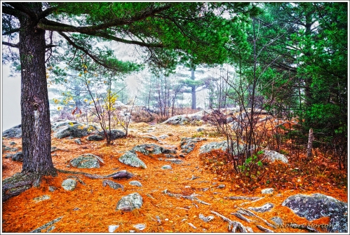Cove Path Autumn