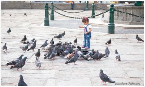 Feeding Pigeons Lima A