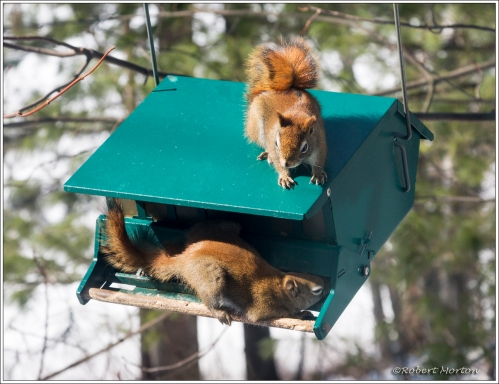Squirrel Proof