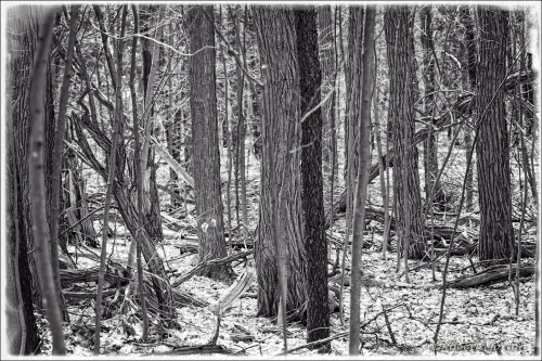 Spring Forest Mono
