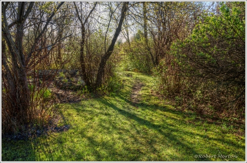 Sweetman's Garden Path 1