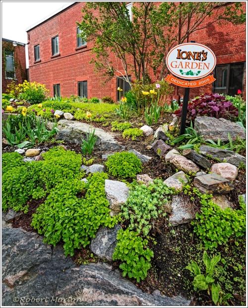 Ione's Garden