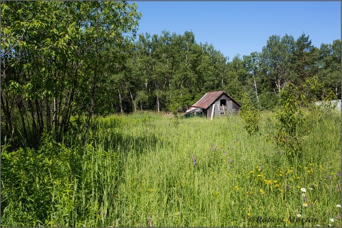 Meadow and Shed