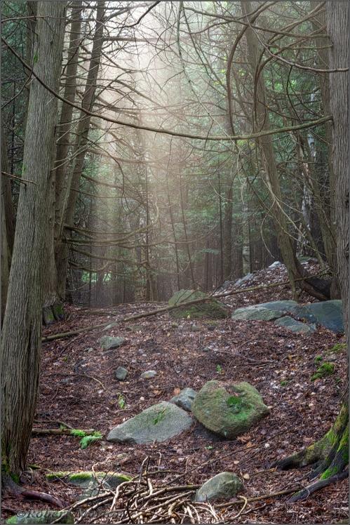 Cedar Sunburst