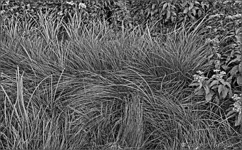 Grasses Mono