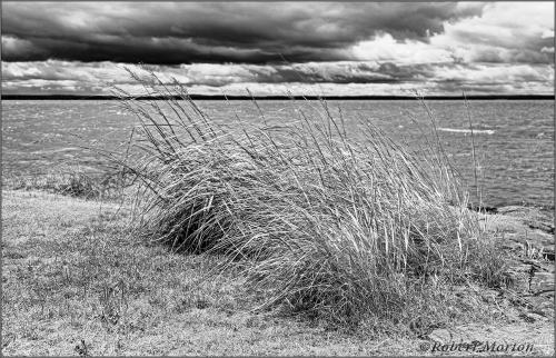 Grasses Nipissing