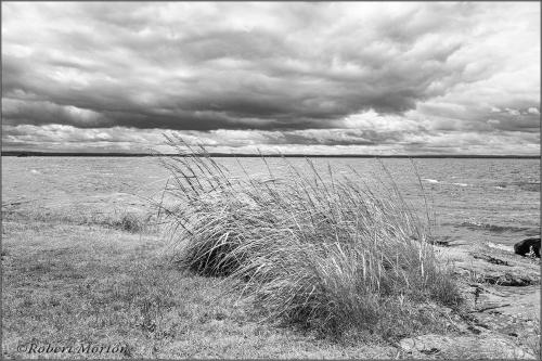 Nipissing Grasses