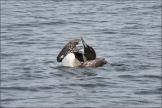 Loon Stretch