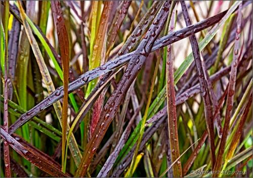 Oak St Grasses 1 Glow 50px